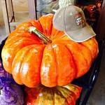 A Waxed Cinderella Pumpkin