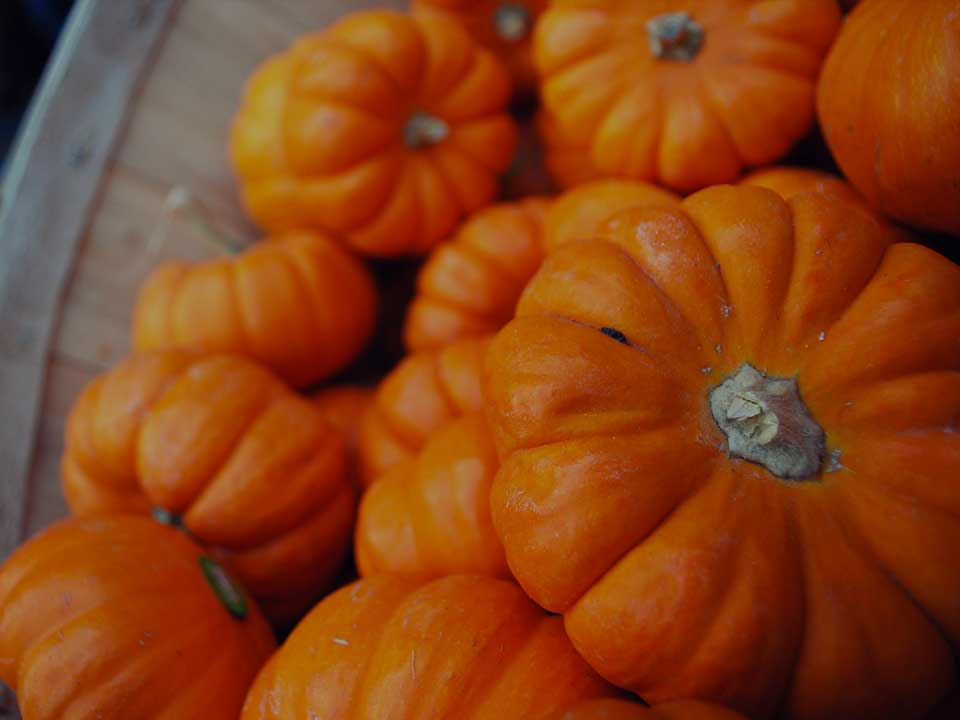 Wholesale Punkins