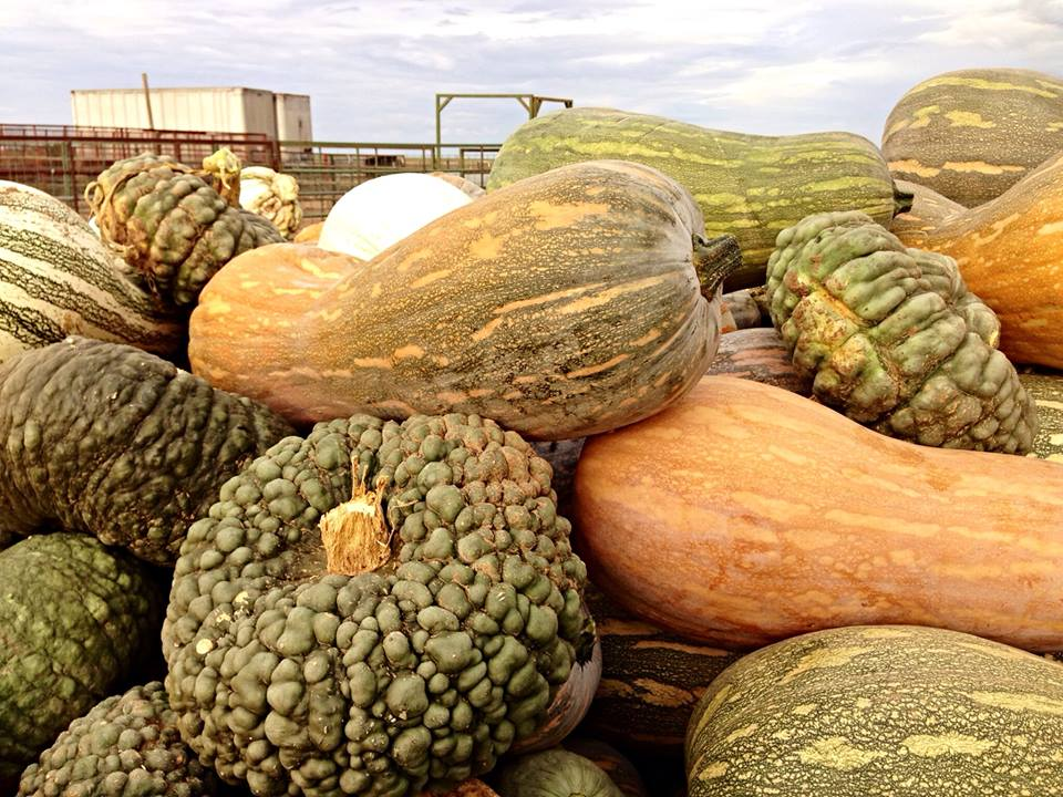 Mixed_Specialty_Squash