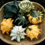crown of thorns gourds