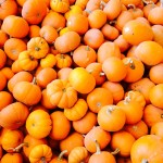 orange pumpkin minis