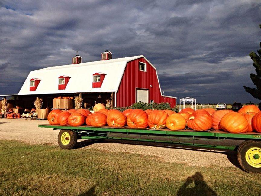 Barn_and_Pumpkins.jpg